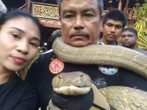 งูทวดยาว5เมตร2