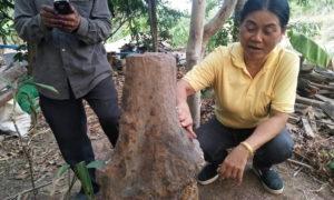 ต้นมะยมกลายเป็นหิน คอหวยโคราช เชื่อโผล่ขึ้นกลางหมู่บ้านให้โชค