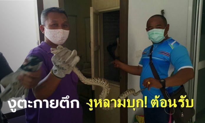งูหลามบุก